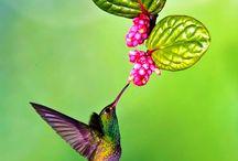 Hummingbirds and butterflies / by Clarinda Nunez