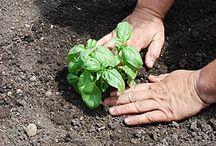 Gardening 101 / by Kirsta Silvey