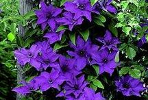 PURPLE passion / by JEANNIE RAILEY