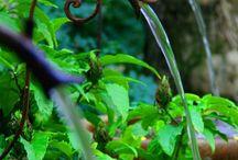 gardening / by Patti Dickert