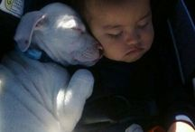 puppy love / by Rebecca Clegg