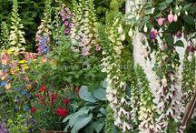 Garden / by Elizabeth Collier