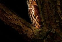 Owls are awesome !! / Owls in nature and as a decoration in the house and in fashion / by Donna Pearson