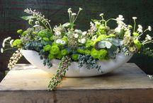 Flowers + Herbs / by Chanee Vijay