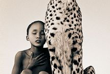 animals / by Teddy Hodges