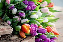 Stylish flowers / Flower is beauty, arrangement is style. / by Doll Memories