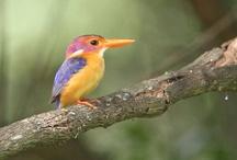 Birds / by Alluring Destinations