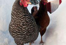 chickens / by Salina Nuñez