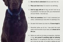 Love my Dog / by Amber Finch