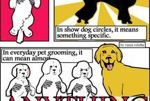 Dog Grooming / by Chelsea Niemann