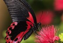 Beautiful Butterflys / by Edwina Washington Poindexter