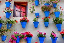gardening / by Silvia Forcada