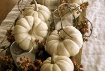 Pumpkins / by Claire Rose