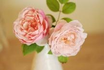 Peachy-Pinks / by bobbi houle