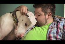 Big dogs...someday / by Kayla Fofayla