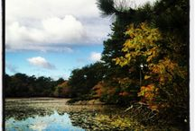 #CapeCodColors  / Capture the colors of autumn with #CapeCodColors! Submit your photos and we'll reward the best ones with a special gift!  / by Cape Cod Potato Chips