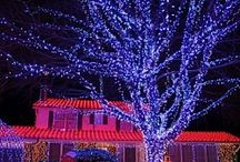 Holiday lights / by Barbara Carr