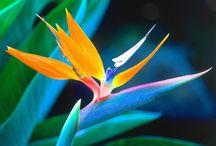 Favorite Flowers / by Deb Lee