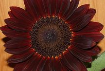 Garden / by Linda Fahey