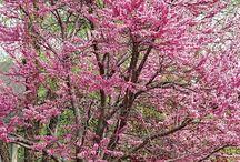 Trees / by Kodi Becker