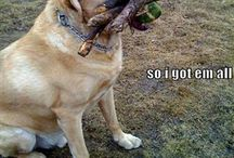 Dog Humor / Even service dogs need a laugh now and then / by Viking Pups