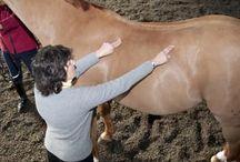 Horses, horses, horses :) / by Lauren Samaniego