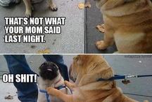 Animal humor :) / by Kelsey Spanier