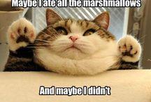 Cats, I <3 them! / by Stephanie Chavez