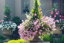 PLANTS / by Liz Hall