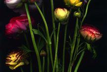 Fleurs - Nature's Art / by Deborah Triplett