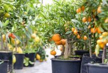 Gardening / by Joseph Page