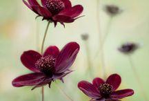 Garden / by Kristy Diesbourg