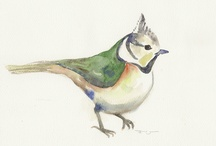 Art - watercolor birds / by Vera Meier