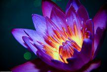 Flowers / by Melissa Budden