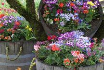 gardening / by Barbara Lamplugh Laskowski