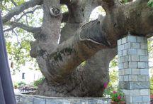 Trees II / by Jenevere Queen