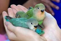 Parrots / by Eve Hogue