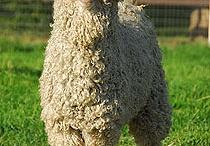 I love sheep! / by Letitia Erckenbrack