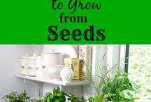 GROW HERBS AND OTHER PLANTS / by Jeanne DuBrasky