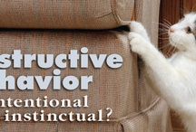 Cat Behavior  / by Emily Fazio