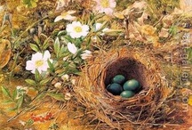 Birds and their nests / by linda canfield