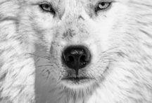Wolf / by Lyli Leyva