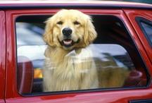 Pup Your Ride! / Why leave your pets behind? Bring them along for the ride!!  / by Furry Travelers