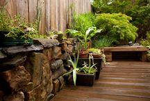 Yard and Garden / by Cari Ard