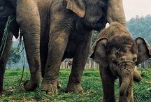 Baby Elephant / by Diana Edelman