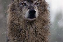 Wolves / by Darian Horrigan
