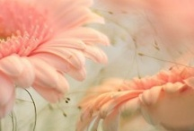 Just Peachy / by Sharon Marrero