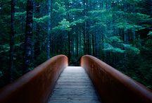 Into the Woods... / by Portia de