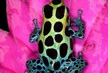 Frogs / God made everything so beautiful, let us appreciate it and enjoy it ♥ / by Magda van Niekerk