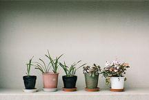 || Garden ||  / by Ashley Gray